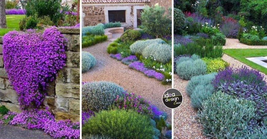 plantes et fleurs pour jardin provençal