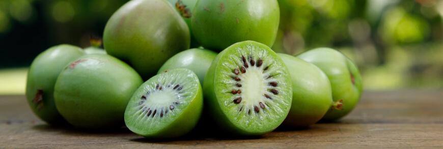 variété de kiwi pour jardin et pergola